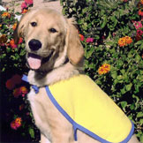 Trixie Super Dog Contest — Winners Announced October 1